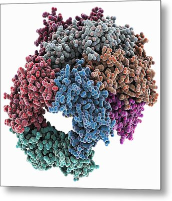 Proliferating Cell Nuclear Antigen Metal Print
