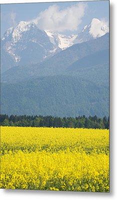 rapeseed field in Brnik with Kamnik Alps in the background Metal Print