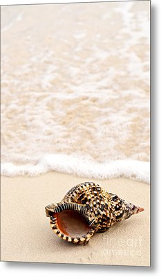 Seashell And Ocean Wave Metal Print by Elena Elisseeva