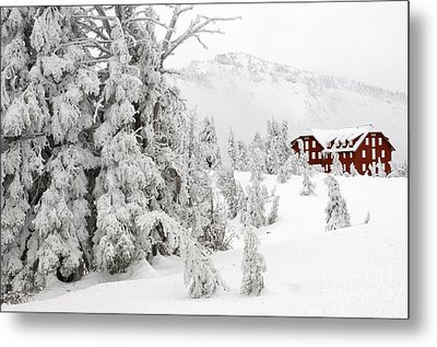 Snow And Ice On Trees Metal Print by John Shaw