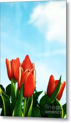 Tulips Background Metal Print by Michal Bednarek