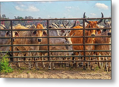 Metal Print featuring the photograph 4025_204 by Lewis Mann