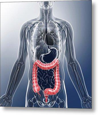 Human Digestive System Metal Print
