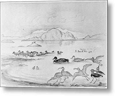 Blackburn Birds, 1895 Metal Print