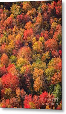 Aerial View Of Fall Foliage In Vermont Metal Print