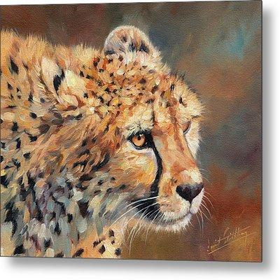 Cheetah Metal Print by David Stribbling