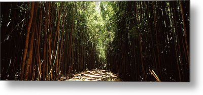 Dirt Road Passing Through A Forest Metal Print by Panoramic Images