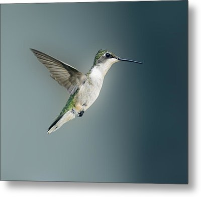 Metal Print featuring the photograph Hummingbird by David Lester