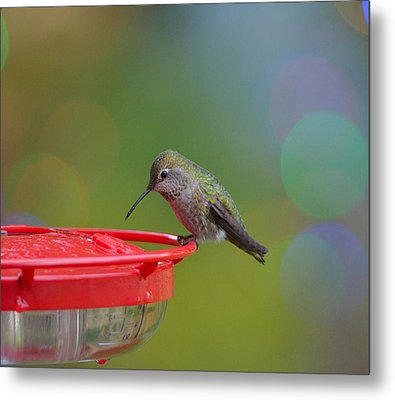 Metal Print featuring the photograph Hummingbird by Kathy King