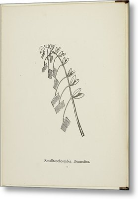 Nonsense Botany Collection By Edward Lear Metal Print by British Library