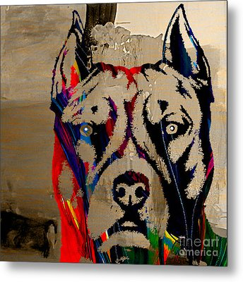 Pitbull Metal Print by Marvin Blaine