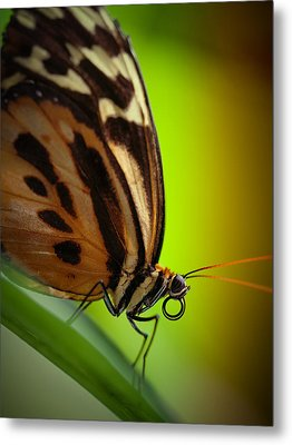 Metal Print featuring the photograph Resting Butterfly by Zoe Ferrie