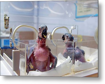 Safari Park Animal Hospital Metal Print by Pan Xunbin