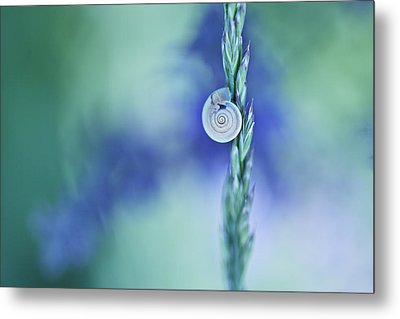 Snail On Grass Metal Print by Nailia Schwarz