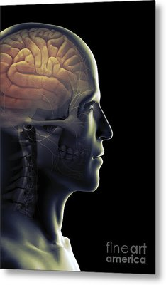 The Human Brain Metal Print by Science Picture Co