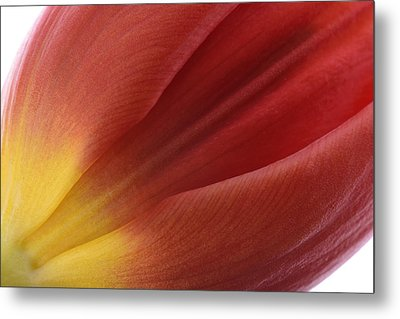 Tulip Metal Print by Mark Johnson