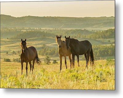 Usa, South Dakota, Wild Horse Sanctuary Metal Print