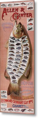 50 Fish From American Waters Metal Print by Georgia Fowler