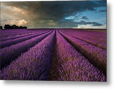 Beautiful Lavender Field Landscape With Dramatic Sky Metal Print by Matthew Gibson