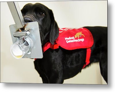 Cancer Detection Dog Training Metal Print