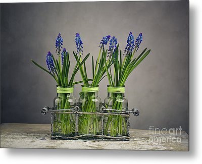 Hyacinth Still Life Metal Print by Nailia Schwarz