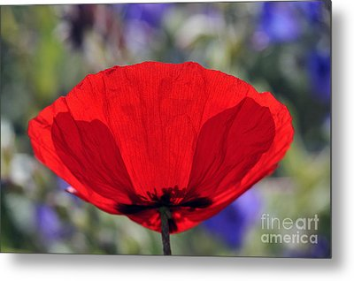Metal Print featuring the photograph Poppy Flower by George Atsametakis