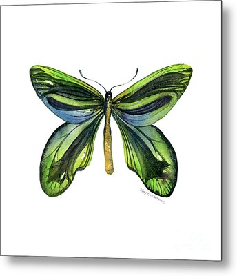 6 Queen Alexandra Butterfly Metal Print by Amy Kirkpatrick