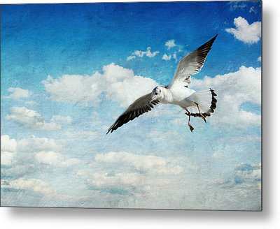 Seagull Metal Print by Heike Hultsch