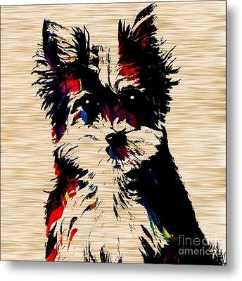 Yorkshire Terrier Metal Print by Marvin Blaine