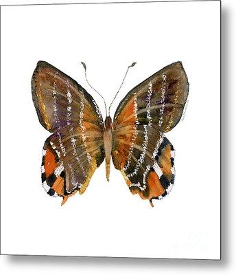 60 Euselasia Butterfly Metal Print