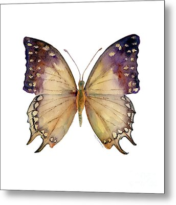 63 Great Nawab Butterfly Metal Print by Amy Kirkpatrick