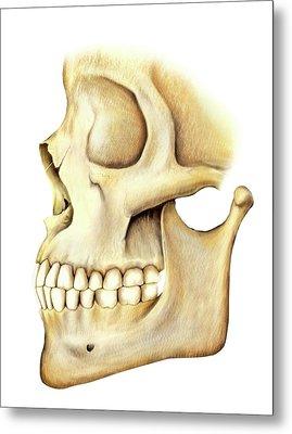 Adult Teeth Metal Print