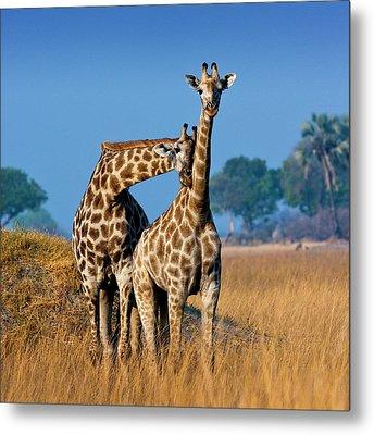 Okavango Delta, Botswana Metal Print