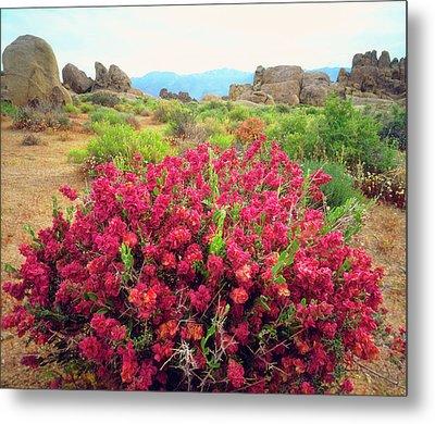 Usa, California, Sierra Nevada Mountains Metal Print by Jaynes Gallery