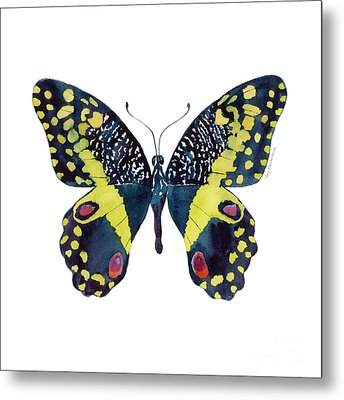 73 Citrus Butterfly Metal Print by Amy Kirkpatrick