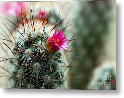 734a Tubular Cactus Flower Metal Print by NightVisions