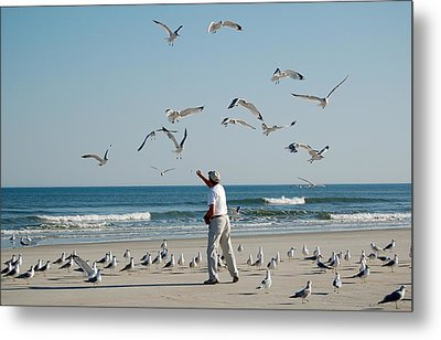 Metal Print featuring the photograph 79 Seagulls by Linda Brown