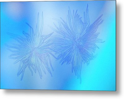 Abstract Polarised Light Micrograph Metal Print