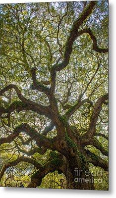 Island Angel Oak Tree Metal Print by Dale Powell