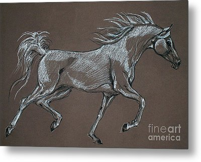 Arabian Horse  Metal Print by Angel  Tarantella