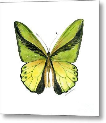 8 Goliath Birdwing Butterfly Metal Print by Amy Kirkpatrick