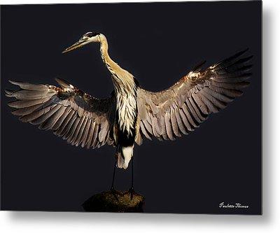 Great Blue Heron Metal Print by Paulette Thomas