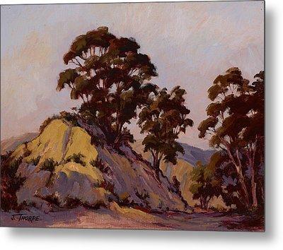 Ridge Eucalyptus Metal Print by Jane Thorpe