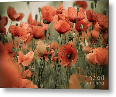 Red Poppy Flowers Metal Print by Nailia Schwarz