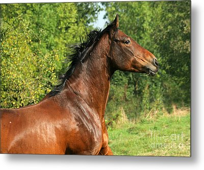 The Bay Horse Metal Print by Angel  Tarantella