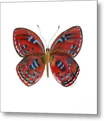 81 Paralaxita Butterfly Metal Print