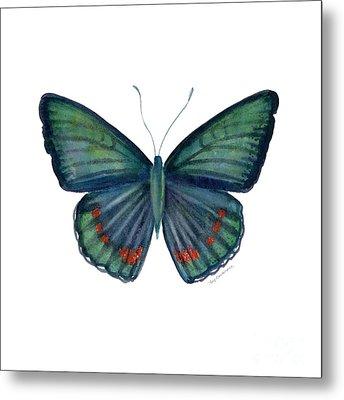82 Bellona Butterfly Metal Print by Amy Kirkpatrick