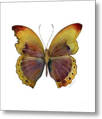 84 Gold-banded Glider Butterfly Metal Print