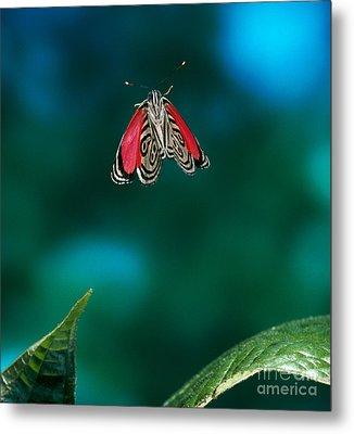 89 Butterfly In Flight Metal Print