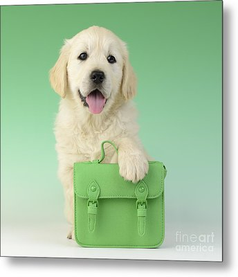 9 - 5 Retriever Dp914sq Metal Print